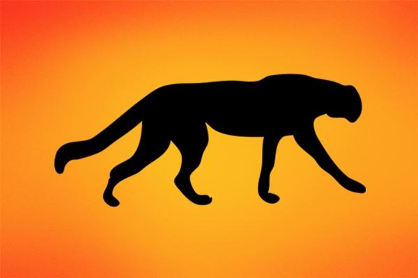 美国男子遭美洲狮攻击:勇敢搏斗将狮子勒死