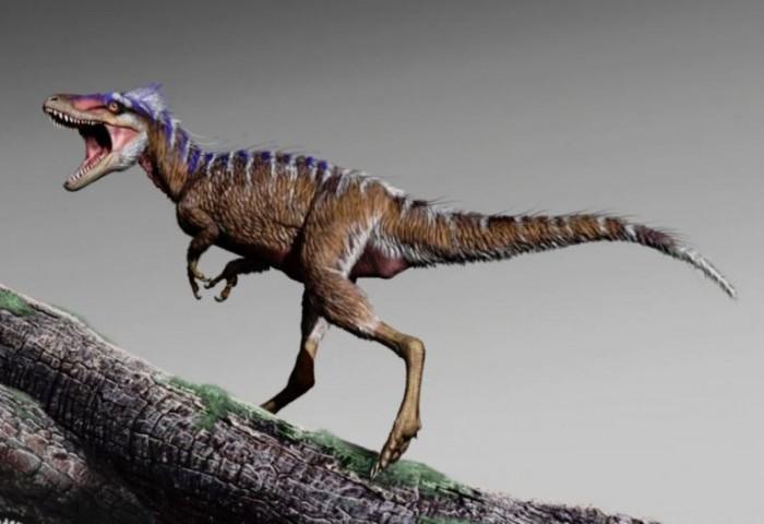 科学家称新发现的霸王龙物种并非处在食物链顶端 体型与现代鹿相当
