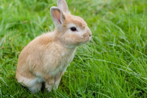 中国科大实现哺乳动物裸眼红外图像视觉能力