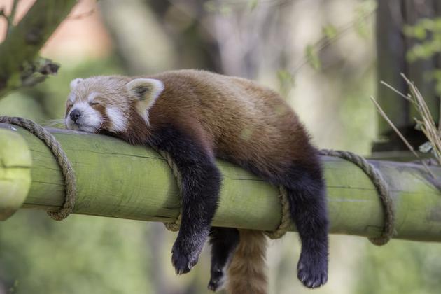 有不用睡觉的动物吗?再少的睡眠也是必不可少的