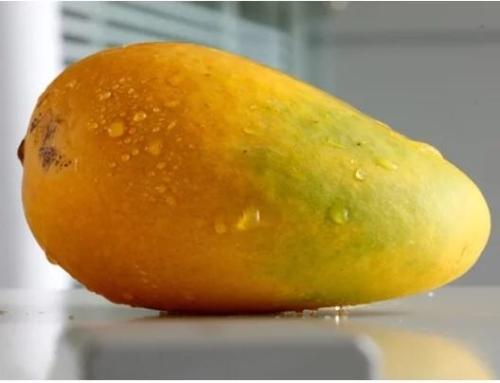 芒果皮要代替塑料?