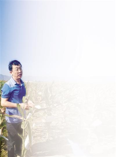 """中国作物营养强化项目负责人张春义:把高营养""""装""""进种子里"""