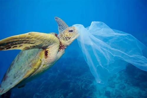 全球塑料垃圾困局如何破解:有可行替代方案吗
