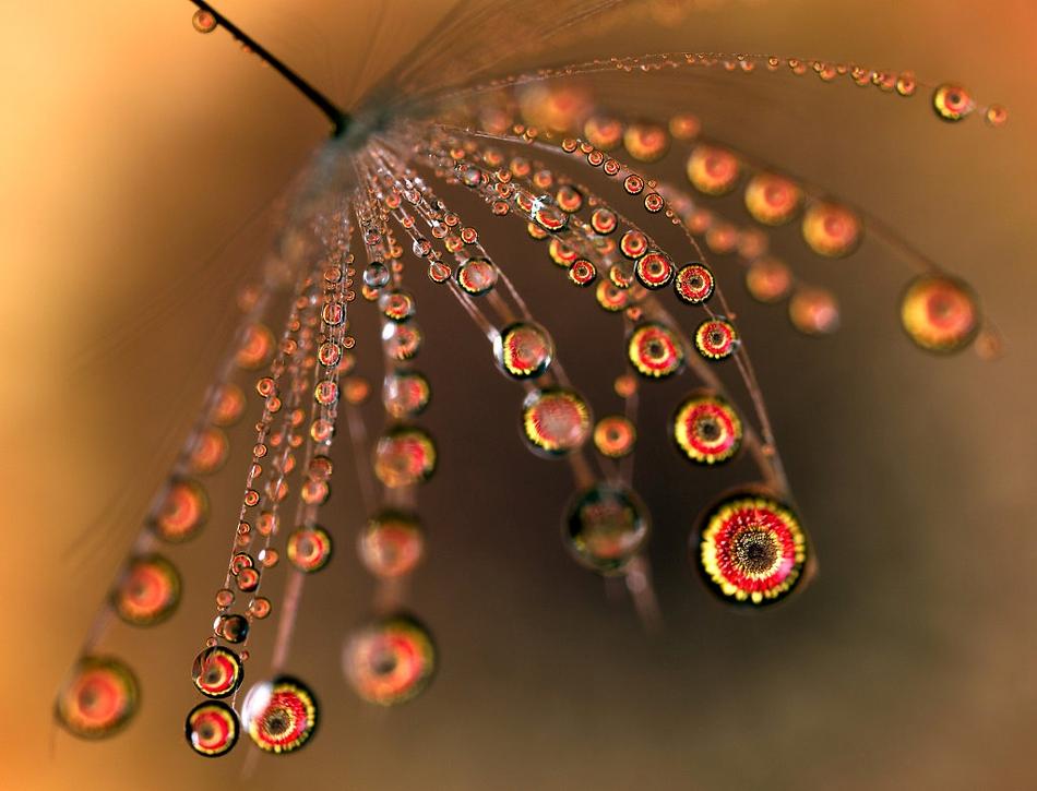 奇特梦幻!微距捕捉水滴里的花朵异彩世界
