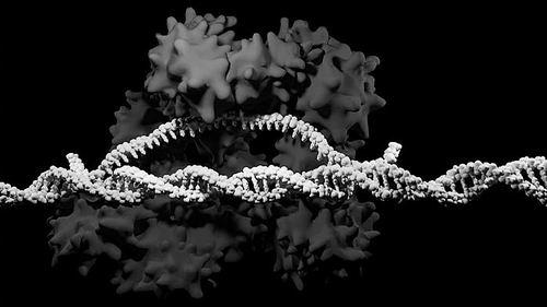 """""""这是一条很大的红线"""" 科学家警告称基因编辑希望与风险并存"""