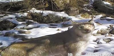 """科技护航赛罕乌拉自然保护区 让近三千种野生动植物""""安居乐业"""""""