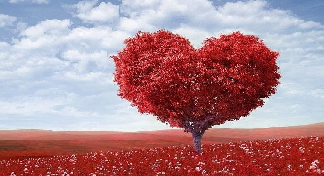 你可长点心吧成为现实:心脏再生技术来了