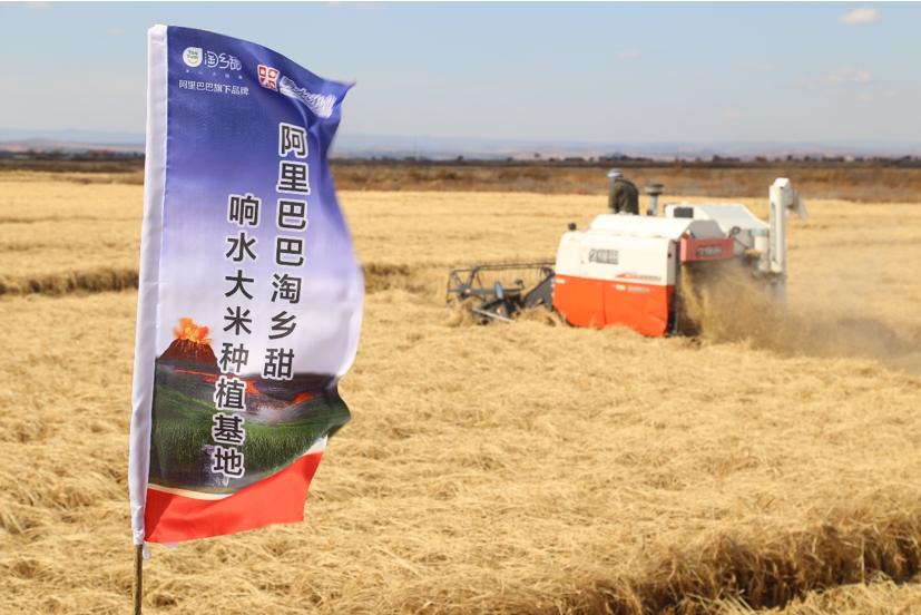 阿里数字农业事业部亮相 将建1000个农业基地