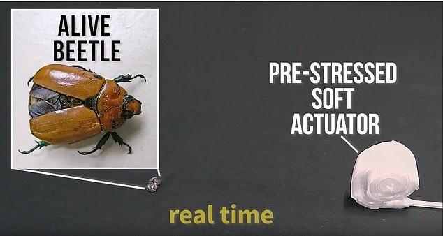 软体机器人仿变色龙舌头,120毫秒能捕捉到昆虫